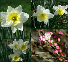 Flowers of March -