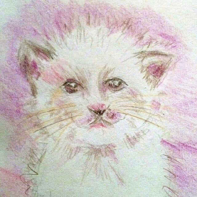 smiling kitty (closeup)