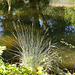 Wallsend Park Pond