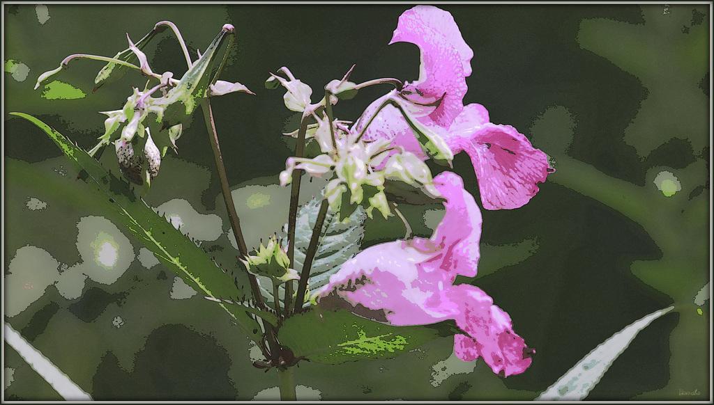 Une fleur par jour.... - Page 11 45428198.59d1344e.1024