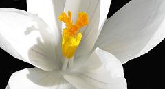 Spring White (Explored)
