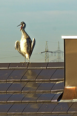 I am the heroe-oups-the heron