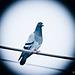 Un oiseau au courant :-)