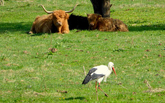 Storch unter Beobachtung