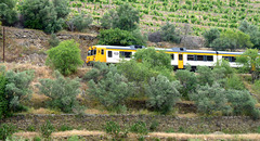 Douro Valley Railway Train near Regua