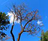 1 (40)..austria lonly tree..baum ..with clouds and plane..herbst autumn