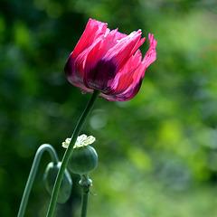 A Giverny, dans le jardin de Claude Monet / In Giverny, in the garden of Claude Monet