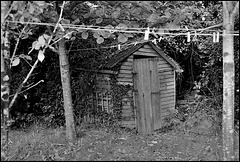 Shed, Gower.