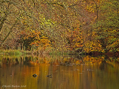 Autumn Colours and Reflections