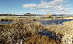 Marsh waterways
