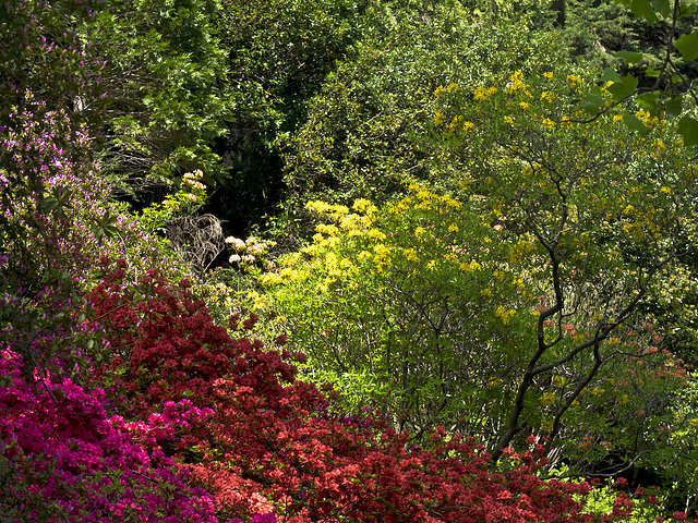 From lilac to deep pink, to red, to yellow; the spring proudly shows her whole self