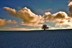 Einsamer Baum in Schneelandschaft - Lonely tree in a snowy landscape