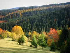 Autumn is the best painter
