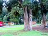Taumaranui Camp At Mananui.