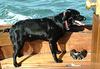 BDD - sea dog