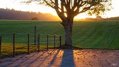 golden sunset fence