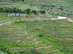 Quinta do Seixo Terracing