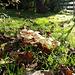 lovely mushrooms