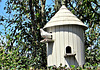Dove and Dovecote.