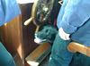 MFS - assistant helmsdog