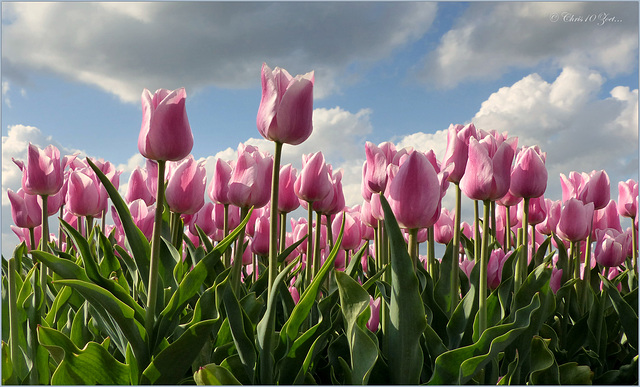 Pink, the color of Happiness...