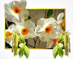 Messengers of Spring... ©UdoSm