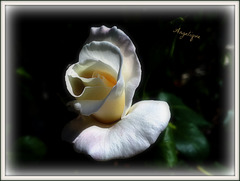 Sincères condoléances aux familles et Amis ( Génois)
