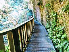 Path to Natural Bridge.