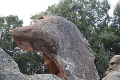 La tête de chien Taffoni pip