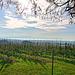 Blick von der Brünnensweiler Höhe auf den Bodensee (note)