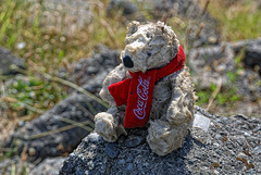 Dirty Coca Cola Bear
