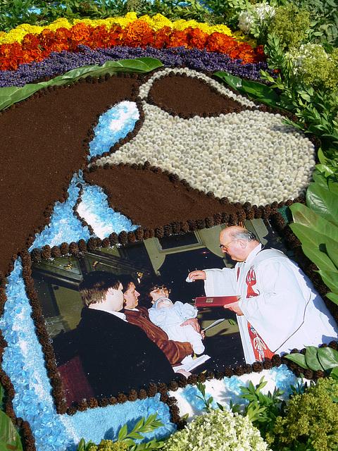 Blumenteppich am Weg (1)