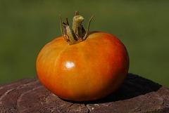 Second Tomato