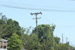 Gulf Power 12.47kV - Pensacola, FL