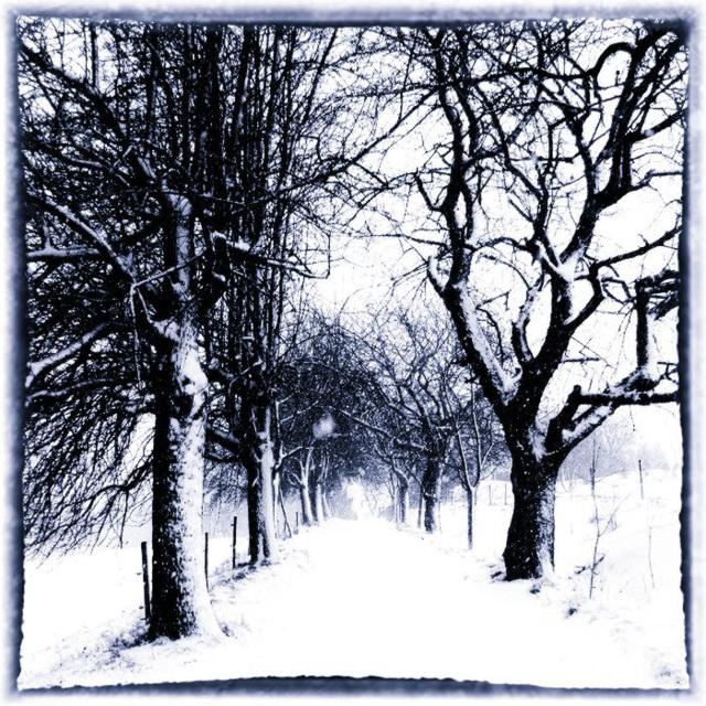 Allee mit Schnee