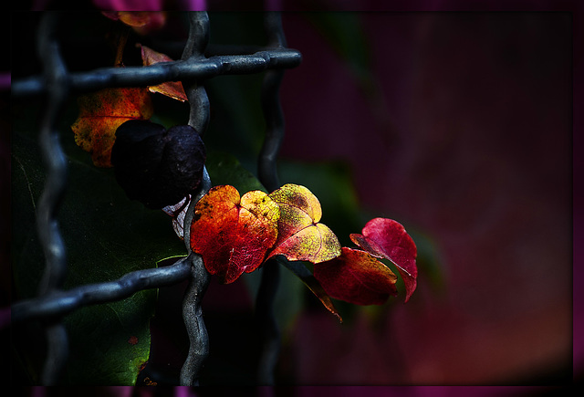 kleine Herbstwelt 1