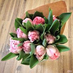 The Tulip Day