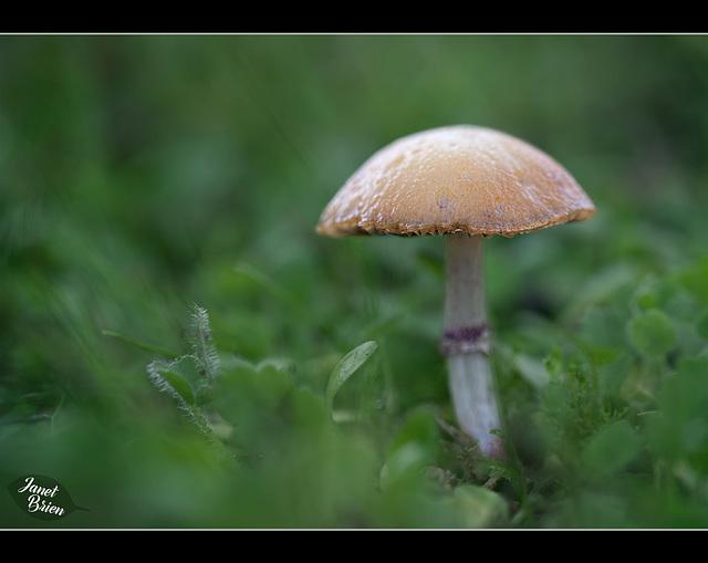 318/366: Shallow Focus Fungus