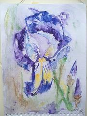 Aquarelle : Iris fait avec une carte bancaire