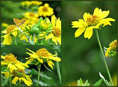 Pamy Flowers -