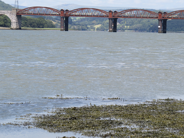 tavy rail bridge from warleigh point, devon