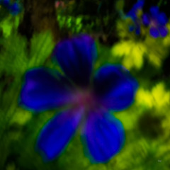 Blue Pinhole Love