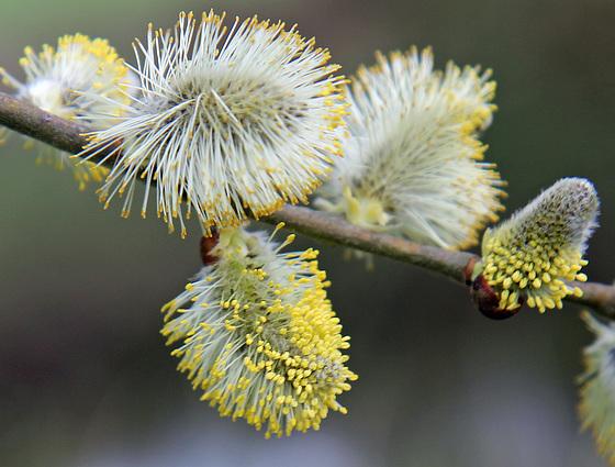Springtime wild flowers