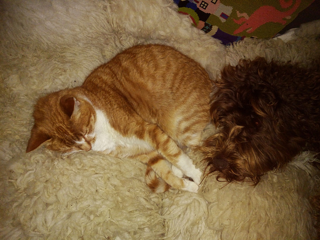 the gingers cosy up
