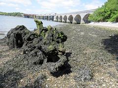 tavy rail bridge from warleigh point, devon