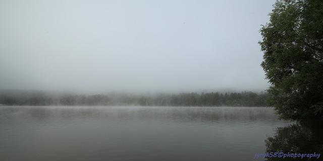 Misty Morning 3