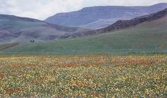 springtime in Algeria