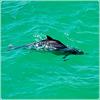 Takah : Un delfino in 3 metri d'acqua