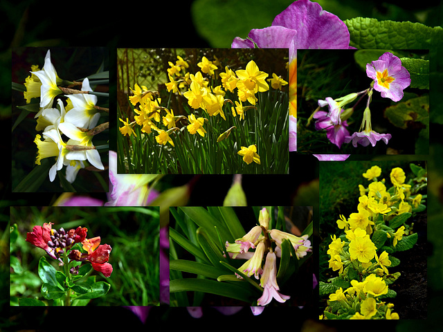 My Garden Flowers + PiP