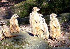 NL - Arnhem - Burgers Zoo